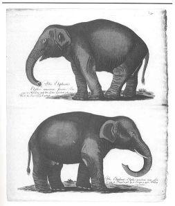 506px-Menagerie.alpi.elefanten